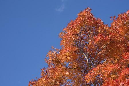 真っ赤に色付いた紅葉