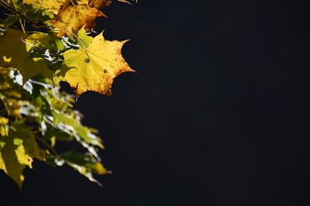 浮かび上がる葉っぱ